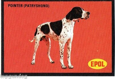 English Pointer Dog South African Trade Card 1974