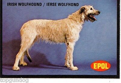 Irish Wolfhound Dog South African Trade Card 1974