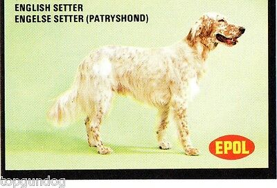 English Setter Dog South African Trade Card 1974