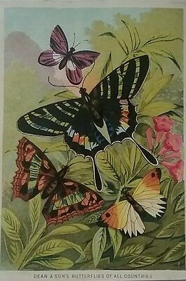 Lovely Chromo Victorian Card by DEAN&SONS. Butterflies of all Countries