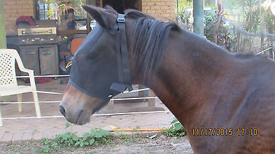 NEW HORSES BLACK FLY MASKS HIGH VISABILITY(Extra Small)