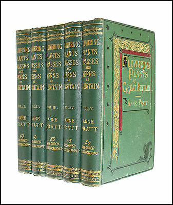 Flowering Plants of Great Britain, Volumes I-V, complete set by Anne Pratt