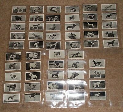 "Cigarette Card Set JOHN SINCLAIR CHAMPION DOGS ""A SERIES OF"" 1938 SMALL SIZE"