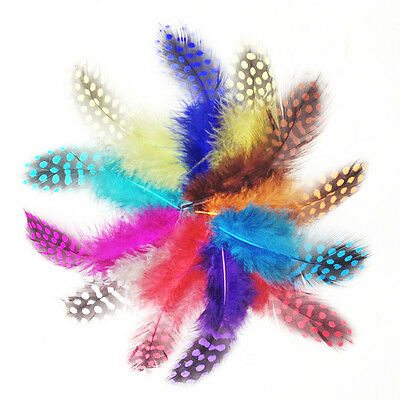 HQ Party Decoration Fishing Crafts Dyed Fantastic 50pcs Guinea Fowl Feathers UK