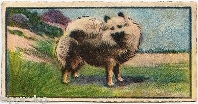 Scarce Pomeranian Dog Toby Periodical Card 1926