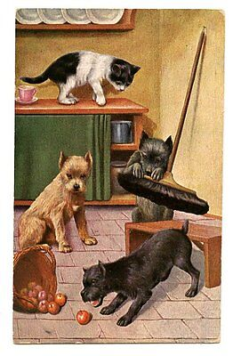 vintage cat postcard art cat watches terrier dogs eat apples play w broom 1948