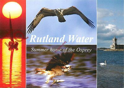 Postcard: Rutland Water, Summer Home Of The Osprey (Multiview)