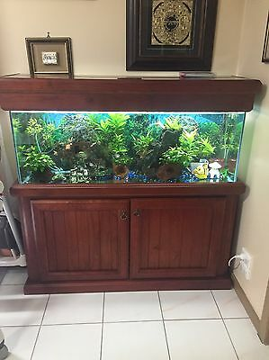 Fish Tank 4ft Tank -complete Accessories Cabinet And Fish
