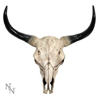 67cm Reproduction Large Bison Skull Wall Plaque Pagan Ornament NEW D0783C4