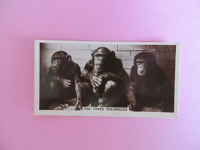 Cavenders Real Photo's Cigarette Card Animal Studies The Three Disgraces