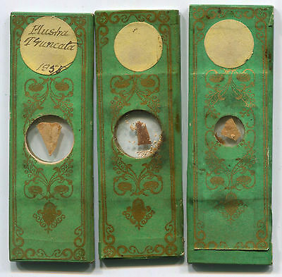 ca. 1855 Paper-Wrapped Victorian Microscope Slides - Zoophytes