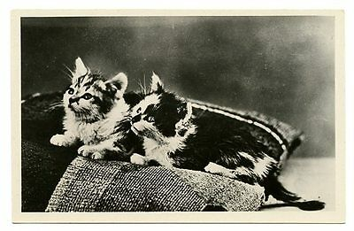 vintage cat postcard real photo gorgeus pair tiny kittens cats on pillow
