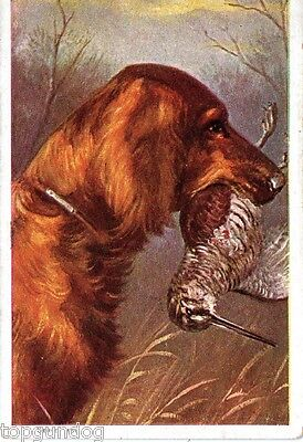 Rare Dutch Irish Setter Dog w Woodcock Lge Chromo Advert Card c1920s
