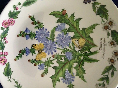 "ROYAL WORCESTER HERBS 'chicory' DECORATIVE 7.5"" PLATE by Bradex Ltd Ed PERFECT"
