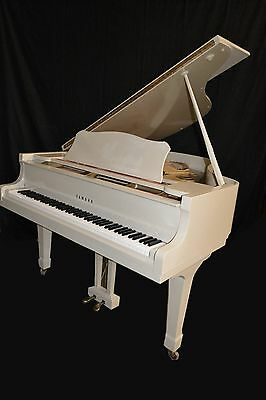 Concert sounding Yamaha grand piano (G5,& C5 size), Watch video! Free delivery..
