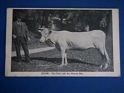 1907  Jessie The Cow With The Human Skin Unused Postcard