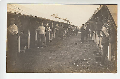 Hertfordshire Imperial Yeomanry Camp - Soldiers, Horse Stabling - RP PC (1614)