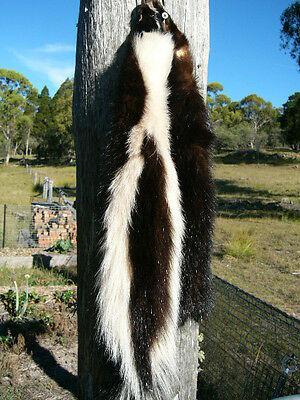New Tanned North American SKUNK skin soft fur & leather no bad smells great gift