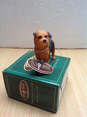 Best of Breed NORFOLK TERRIER (new)