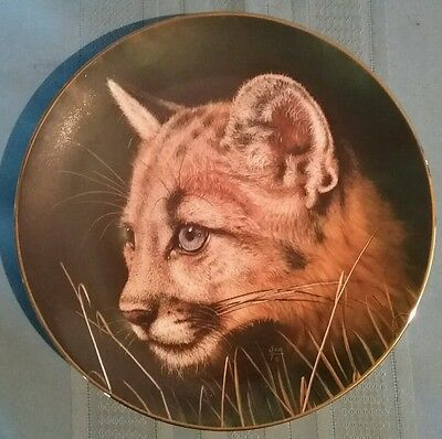 """Decorative Plate """"Cougar Cub"""" by Qua - Princeton Gallery - Cubs of the Big Cats"""
