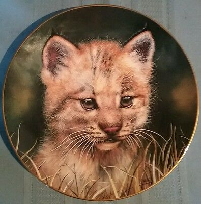 """Decorative Plate """"Lynx Cub"""" by Qua - Princeton Gallery - Cubs of the Big Cats"""