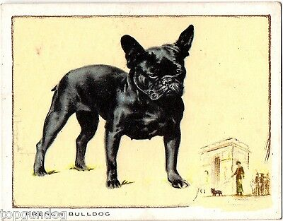 French Bulldog Champion Gabrielle Silpho Tobacco Card 1934