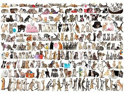 Eurographics 1,000 Piece Jigsaw Puzzle - The World Of Cats