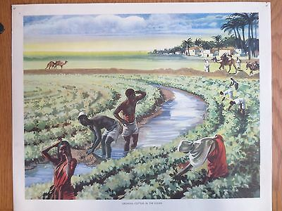 VINTAGE CLASSROOM POSTER 1950s Growing Cotton in Sudan Mac Tatchell Macmillans