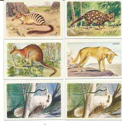 1960s Shell Petrol Swap Cards - Wildlife - Lot of 6