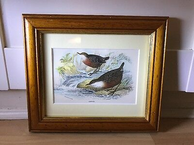 Charming Victorian Print Of Bird In Wood Frame