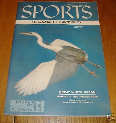 sports illustrated  feb 20  1956  great white heron