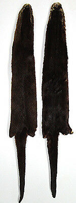 Tanned River Otter Fur Head Tail Skin Pelt Ready To Use