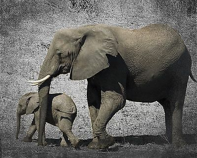 Black White Brown Art Photo Print Elephant & Baby Home Decor Picture Matted