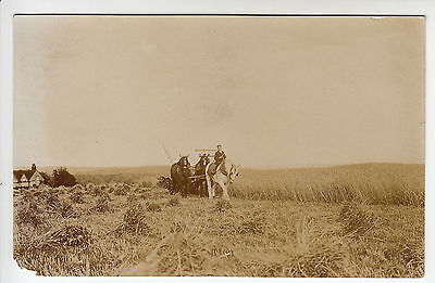 Frieth, Buckinghamshire? - Team of Heavy Horses, Harvest - RP PC PU 1908 (2494)
