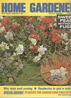 1967 11 FEBRUARY 37875 Home Gardener Magazine SWEET PEAS WITHOUT FUSS
