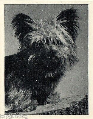 Skye Terrier Dog Real Photo Trade Card 1955