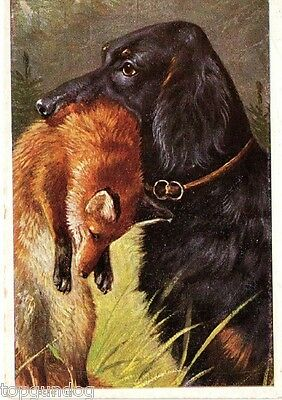 Rare Dutch Gordon Setter Dog w Fox Lge Chromo Advert Card c1920s
