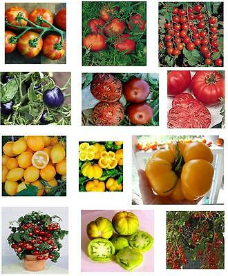 Tomato Seeds Collection  ORGANIC- 10 Unusual Varieties & Over 100 Seeds!
