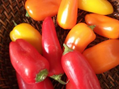 Sweet Mini Peppers,yellow,orange,red,100 Seeds