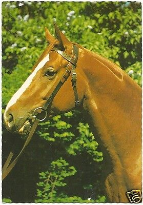 Original Vintage 1950s-60s Large German PC- Beautiful Brown Horse with Harness