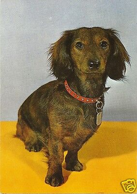 Original Vintage 1970s Large German PC- Dog- Dachshund with Red Spiked Collar