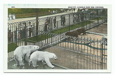 Bear Pit, Lincoln Park Zoo, Chicago, Unused Vintage Postcard