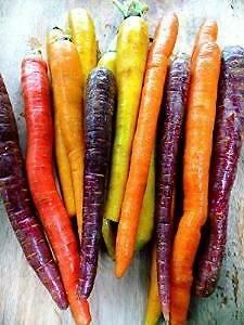 Carrot  Mixed colours and varieties - 100 Seeds ORGANIC