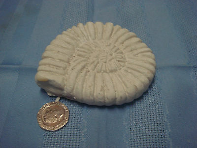 """Latex Rubber Mould Small Ammonite, Fossil   3.5"""" Width"""