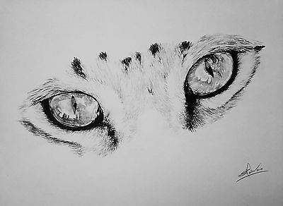 Pencil drawing - Cats Eyes sketch, original, signed not a print - Lucy Malivoire