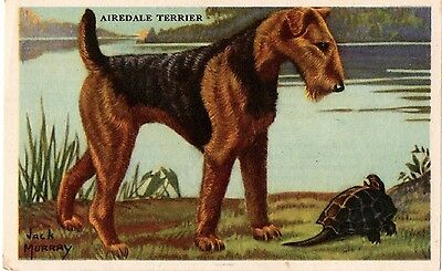 Airedale Terrier Dog Jack Murray Kelloggs Gro Pup Card 1951