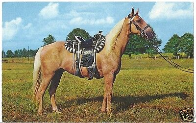 Original Vintage 1950s-60s Horse PC- Palomino Horse with Fancy Saddle- Harness