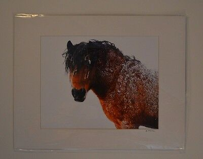 Horse in Winter Photography Art Equine Image Signed 14'' x 11'' Matted