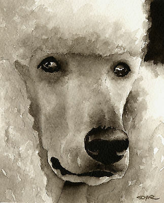 WHITE POODLE Watercolor 8 x 10 ART Print Signed by Artist DJR