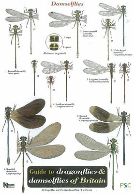 Guide to Dragonflies and Damselflies (Chart) Field Studies Council